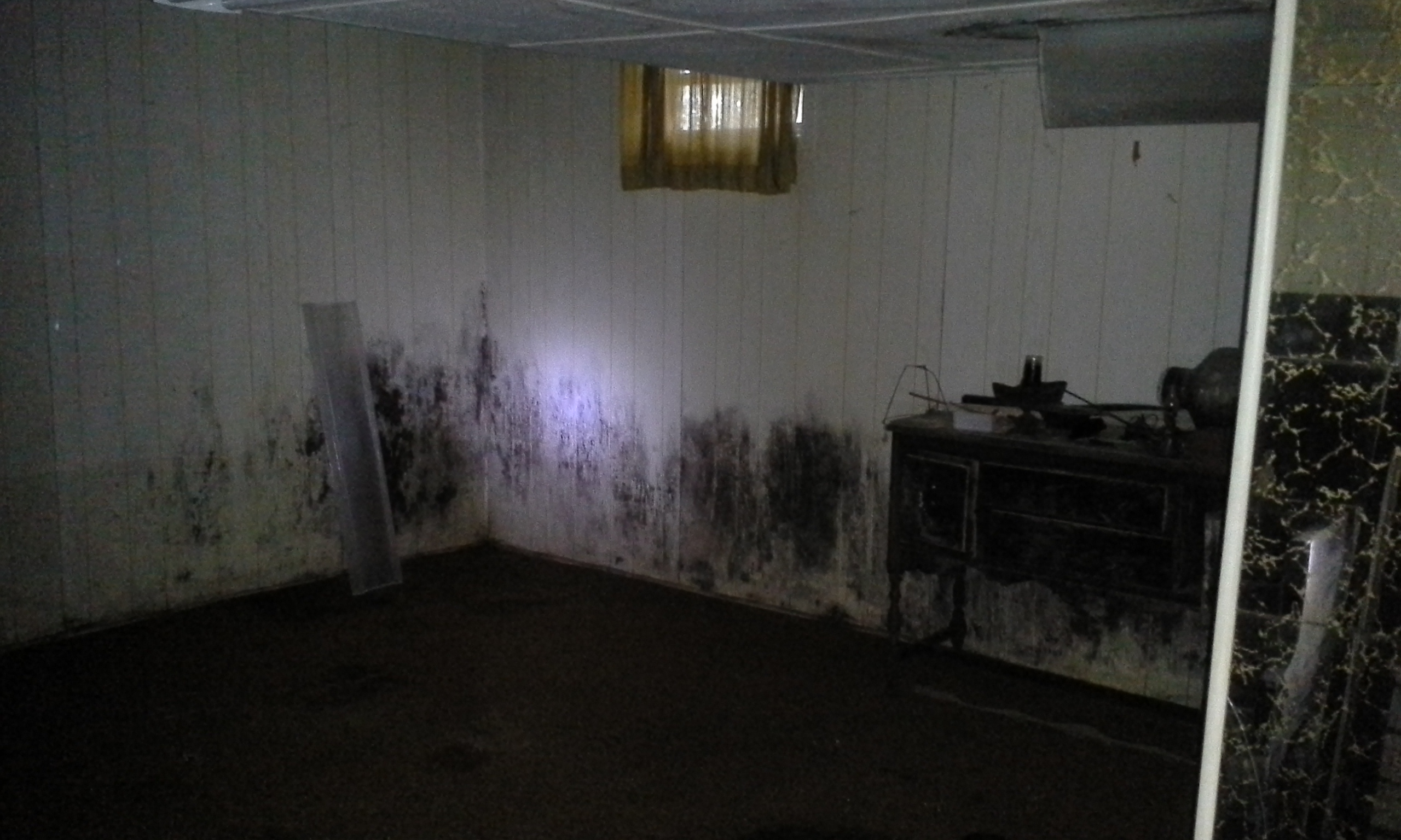 MOLD REMEDIATION CHARLOTTE