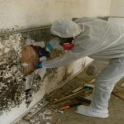 Mold Removal Charlotte, NC