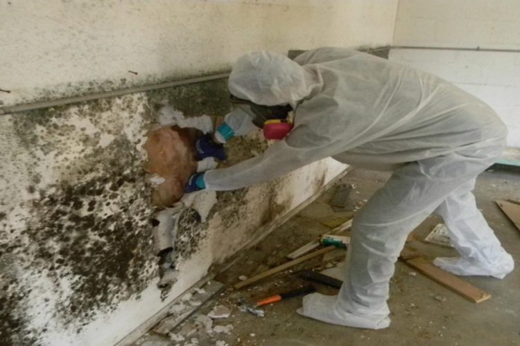 MOLD REMEDIATION CHARLOTTE – Video